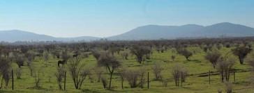 Fundo El Llano